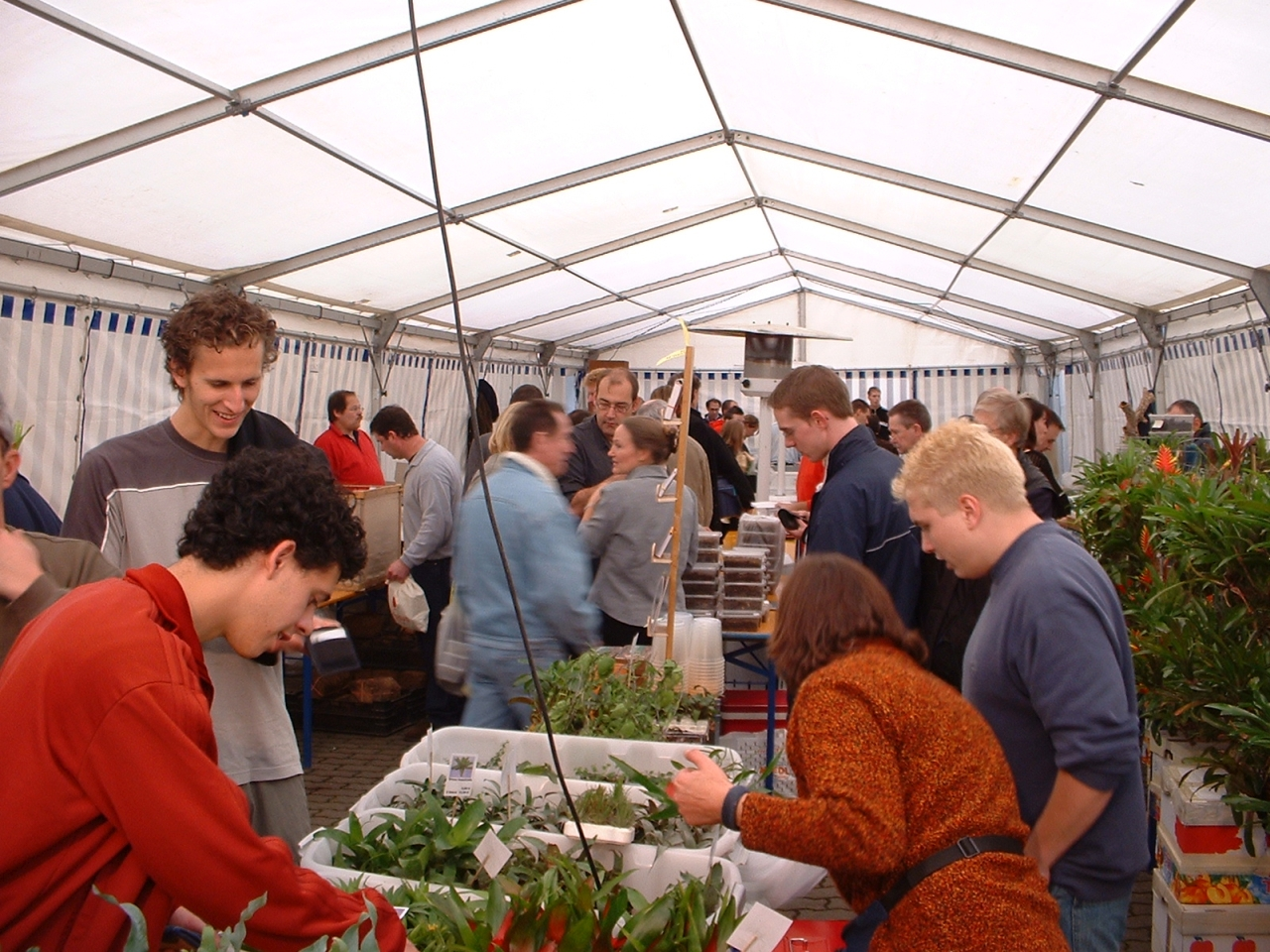 Pflanzen im Zelt